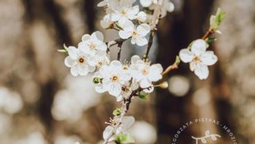 Zadbaj o Siebie na wiosnę